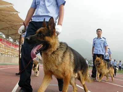 Police dog of Olympic Games security